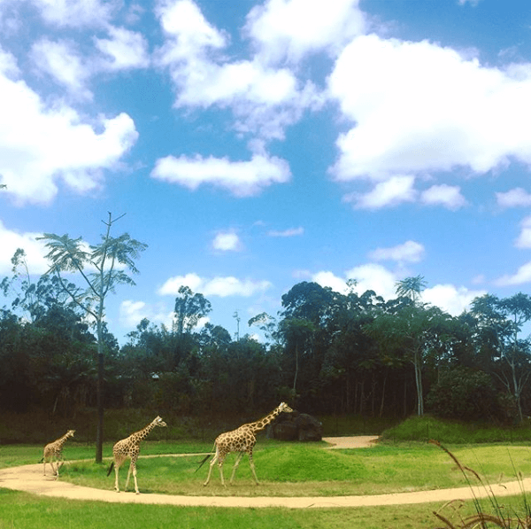 Australia Zoo in Beerwah